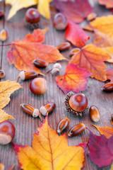 木板の上の木の実と紅葉の落ち葉
