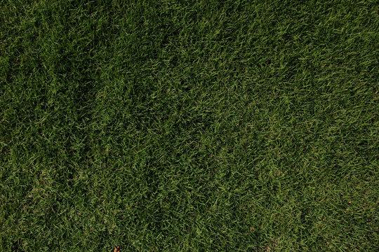 Трава, газон, поле
