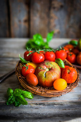 Multicolored tomatoes on rustic wooden background