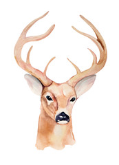 Watercolor deer head. Handmade illustration.
