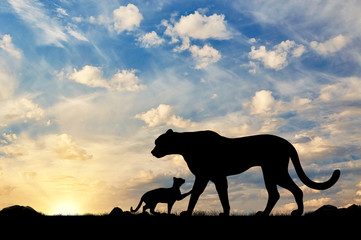 Silhouette of a cheetah and cubs
