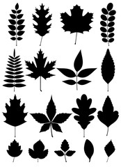 image of simple black silhouette of leaves