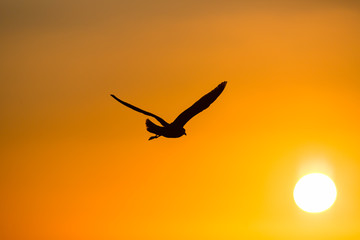 bird portrait flying silouette towards sun