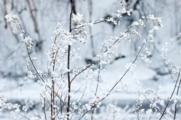 Ice covered flower in a forest
