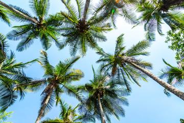 Palmen an einem Strand in Costa Rica von unten fotografiert