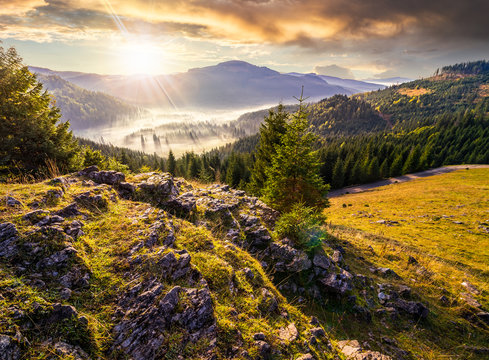 view from a rocky cliff to full of fog valley with conifer forest in high mountains of Apuseni Natural Park in Romania in evening light