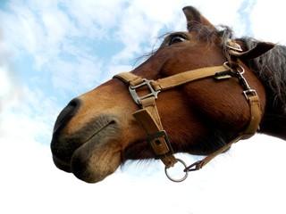 Horse head in sky