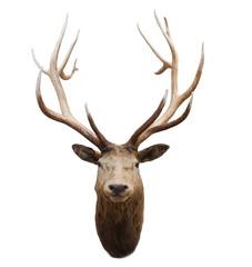 head of wild deer and horn in fiordland national park new zealan