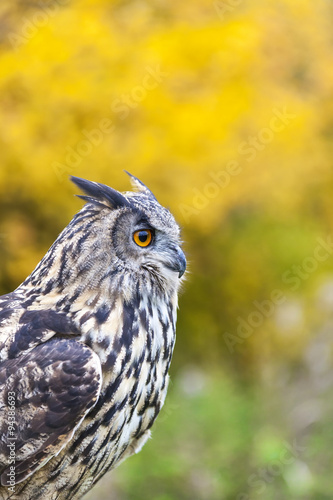 Wall mural European Eagle Owl