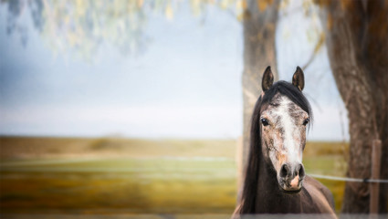 horse standing and looking at camera over nature background wit tree and foliage, banner