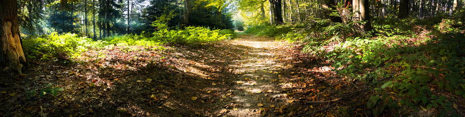 Panoramic view of the sun rays in the forest