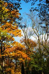 Herbstlicher Mischwald mit bunter Lauffärbung - Goldener Herbst, Buche, Ahorn und Eiche