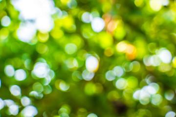 Natural Bokeh,blurred bokeh.