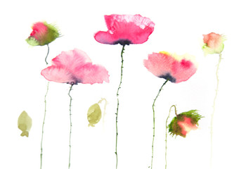 Modern art of poppy painting, watercolor illustrator