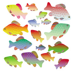 Sixteen colorful fish