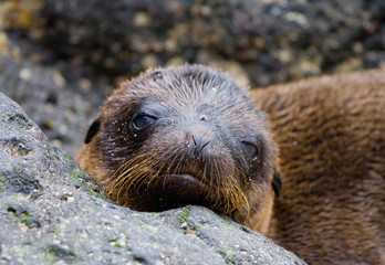 Portrait of sea lion lying on the sand in the Galapagos. Islands. An excellent illustration. Close-up.