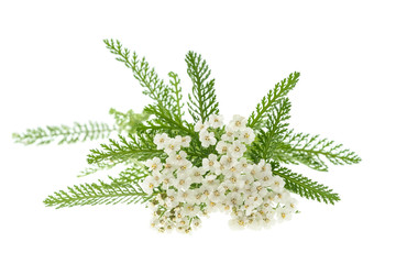 Wall Mural - White yarrow