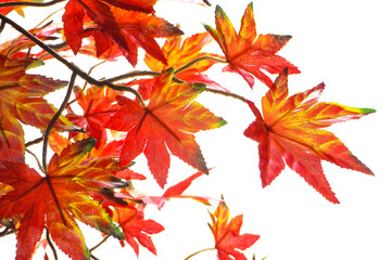 bouquet artificial maple , Vivid color leave are orange on White