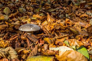 Pilz im Herbst II