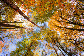 Korony drzew jesienią