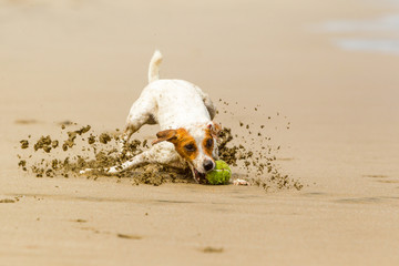 Dog High Speed Action