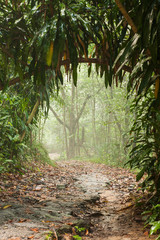 Misty rain forest on Borneo with pathway