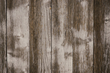 Texture of old vintage bark wood use as natural background