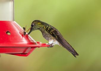 Hummingbird Feeder Device