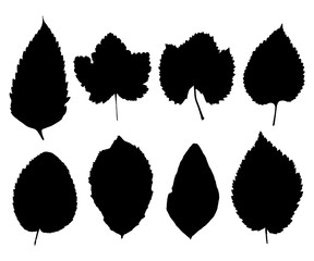 Set of silhouettes of leaves isolated on white