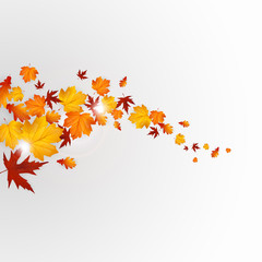 Autumn leaves background design, vector