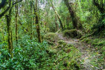 Hiking trail in National Park Podocarpus, Ecuador
