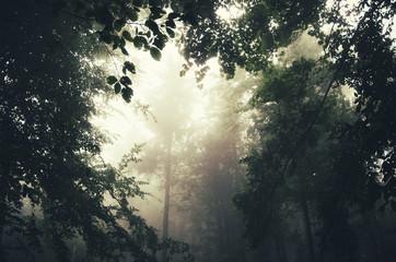 light beam in forest