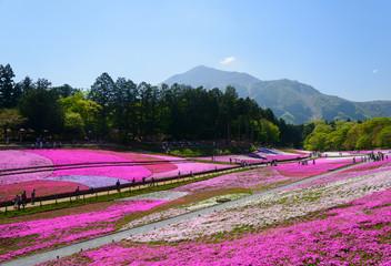 Spoed Foto op Canvas Roze Shibazakura (Moss Pink) Hill and Mt.Buko at Hitsujiyama Park in Chichibu, Saitama, Japan