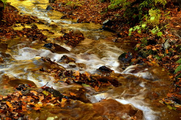 Small river and fallen leaves of mountain