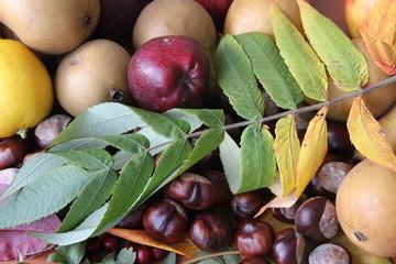 Fototapeta owoce jesieni  obraz