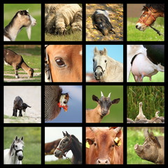 collection of farm animals images