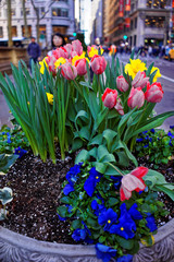 Flower bed in the streets of New York City, USA