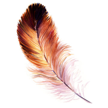 Beautiful watercolor bird feather isolated