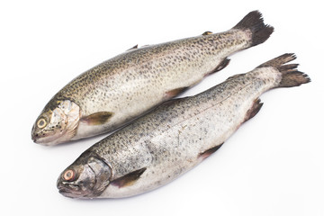 Two rainbow trouts isolated on white