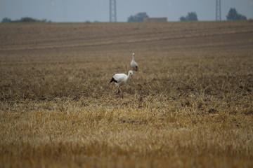 Fotoväggar - Storch