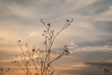 flower silhouette at sunset