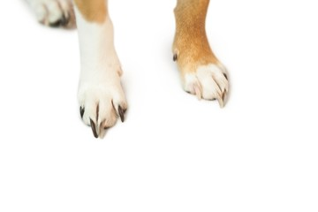 Cute dogs paws
