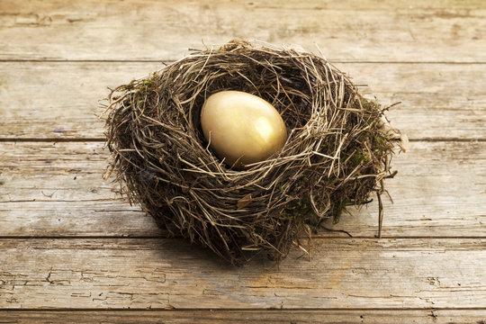Golden egg in nest on rustic wood