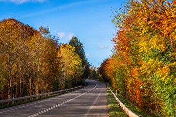 Colorful trees by a road