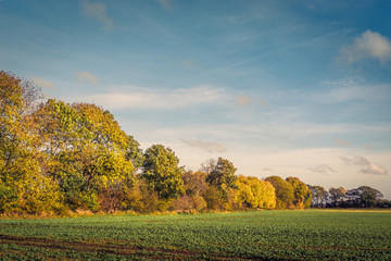 Colorful tree by a field
