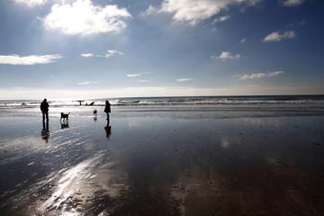 Dog walking on a beach in winter