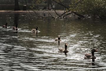 Vintage Duck & Geese Pond