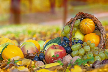 Autumn in the orchard, basket full of fresh fruit