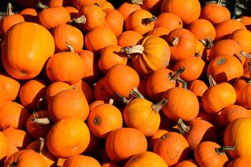 Pumpkins on display at the farmers market.