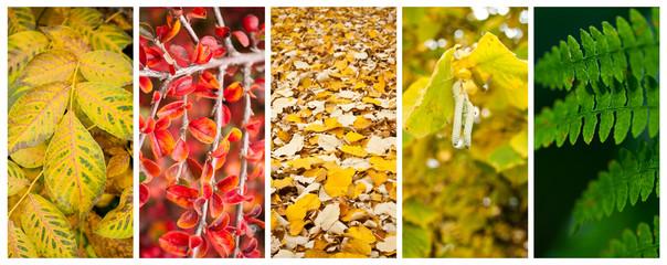 composition nature en automne